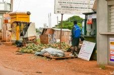 Ananas warten am Straßenrand auf Kunden.