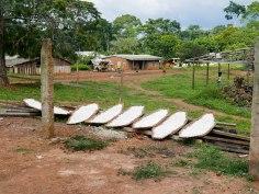 Maniok muss mindestens drei Tage gewässert und getrocknet werden bevor er gegessen werden kann, sonst ist er giftig und verursacht die durch Blausäure vermittelte Konzo-Krankheit.