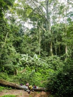 Die Quelle im Urwald hinterm Haus.